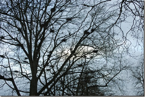 heron tree
